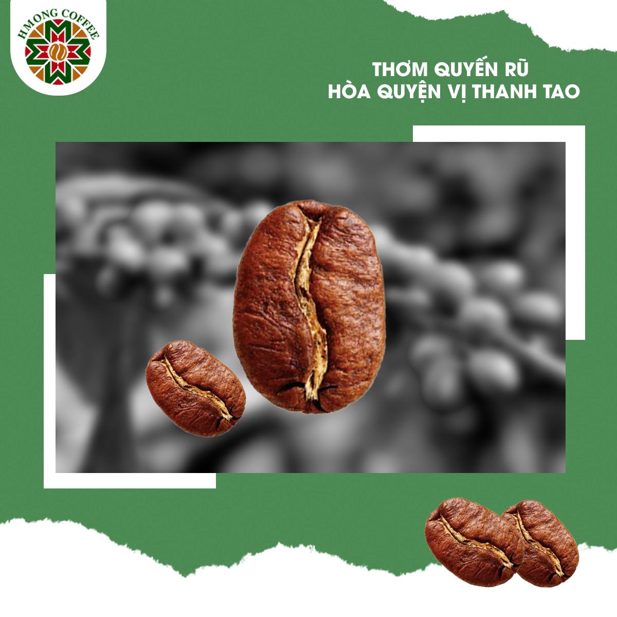 Đặc trưng nhận dạng của hạt cà phê Arabica